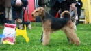 BIS 3 Terrier Speciality 2011