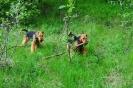Shannon rydder underskogen