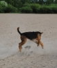 Airborne Airedale above a Cairn