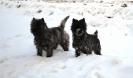 Toto and Luda